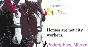 victoria carriage tours