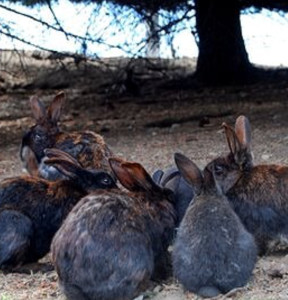 view royal rabbits