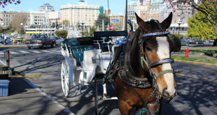 City Council Bans Horse Carriages