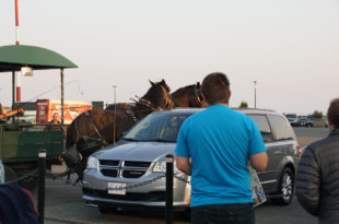 horse carriage accident